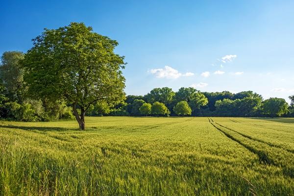 zone agricole protégée ZAP du PLU